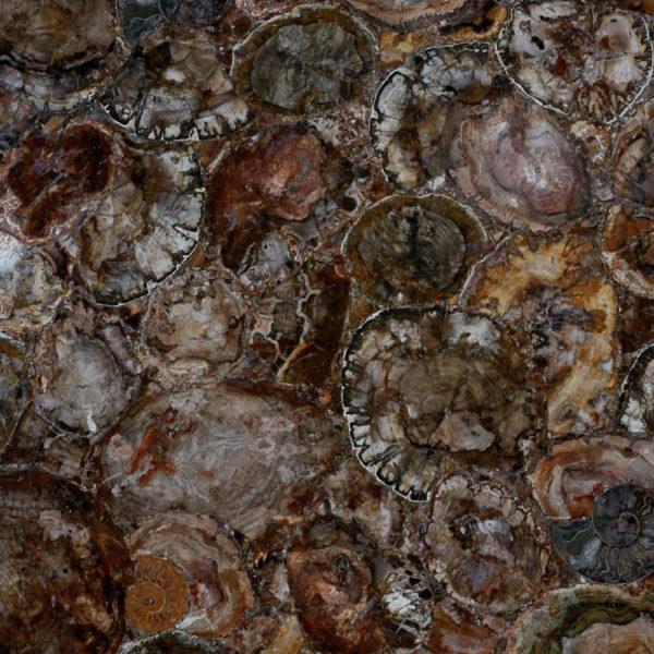 Натуральный камень, Полудрагоценный камень Petrified Wood, фото 1
